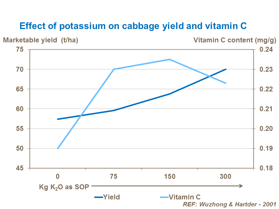 Effect of potassium on cabbage yield and vitamin C