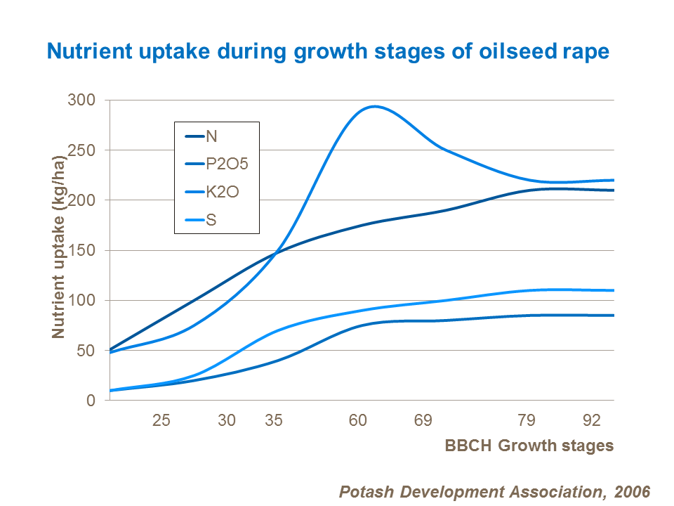 Nutrient uptake during growth stages of oilseed rape