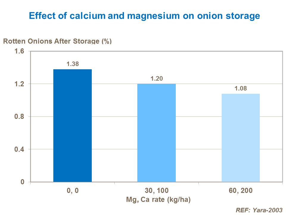 Effect of calcium and magnesium on onion storage