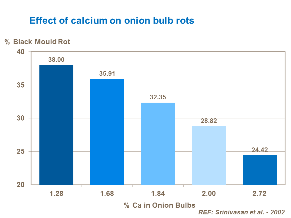 Effect of calcium on onion bulb rots