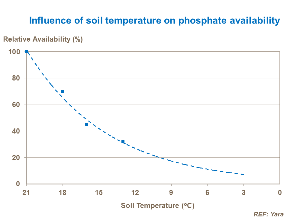 Influence of soil temperature on phosphate availability