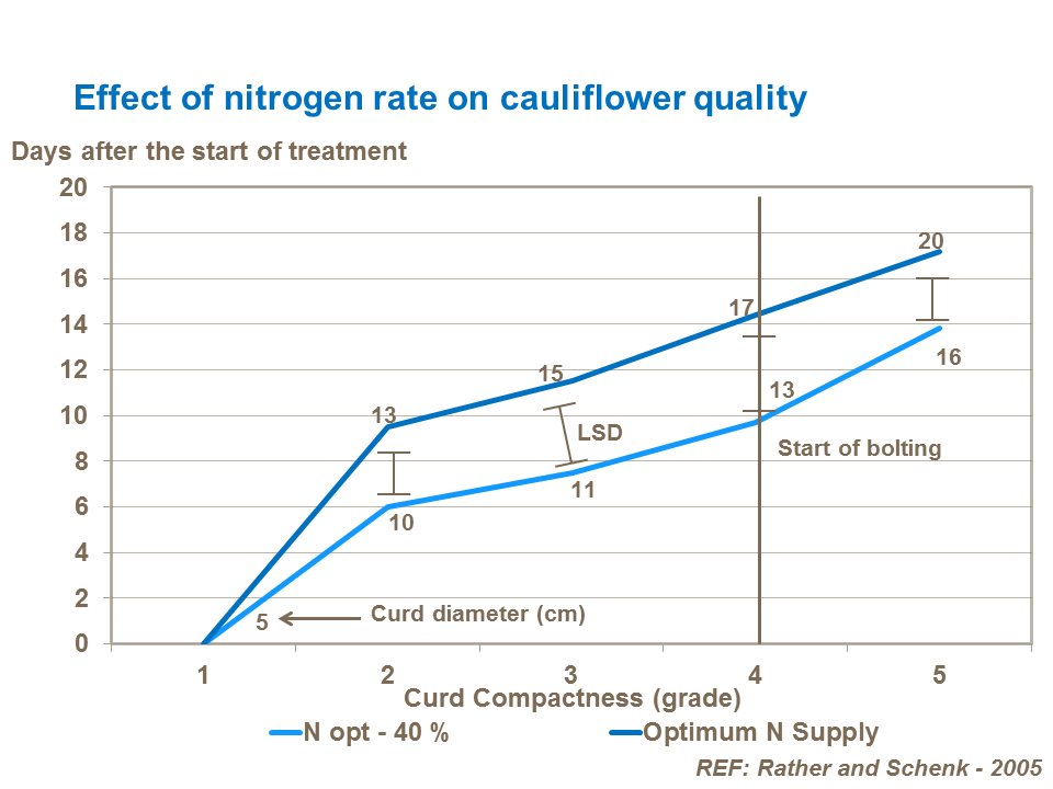 Effect of nitrogen rate on cauliflower quality