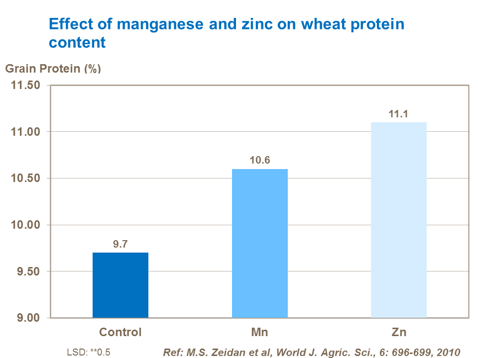 Effect of manganese and zinc on wheat protein content