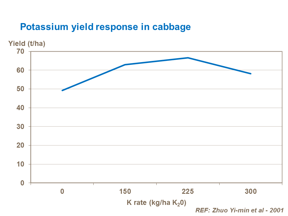 Potassium yield response in cabbage