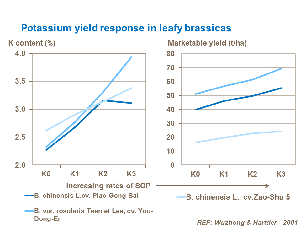 Potassium yield response in leafy brassicas