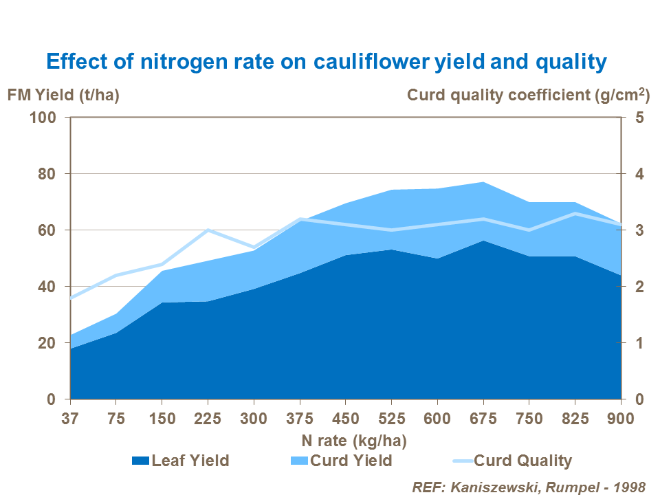Effect of nitrogen rate on cauliflower yield and quality