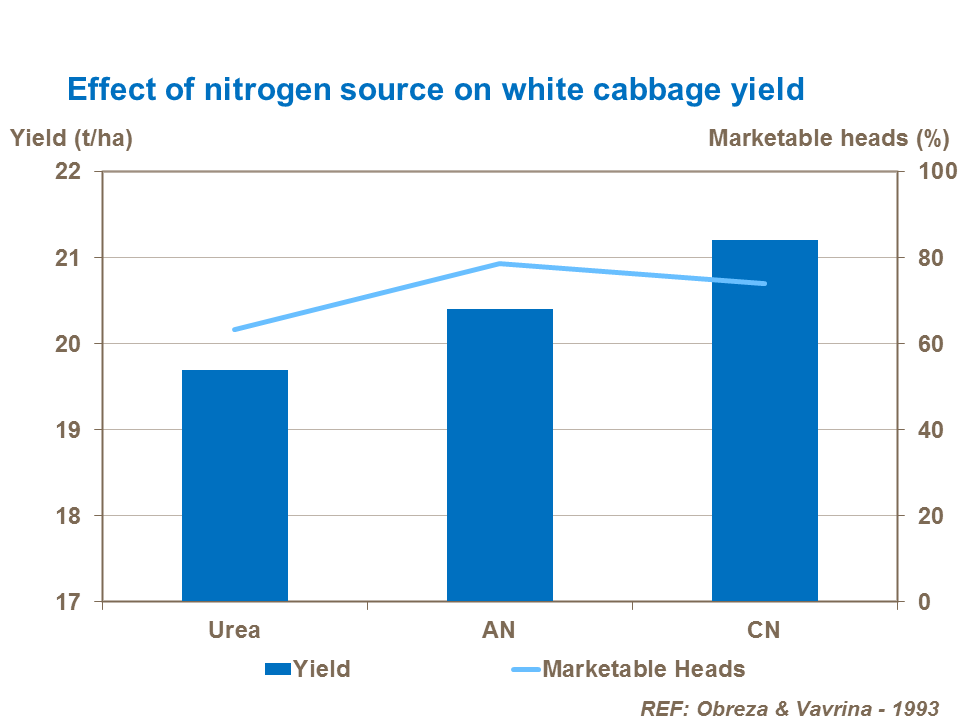Effect of nitrogen source on white cabbage yield