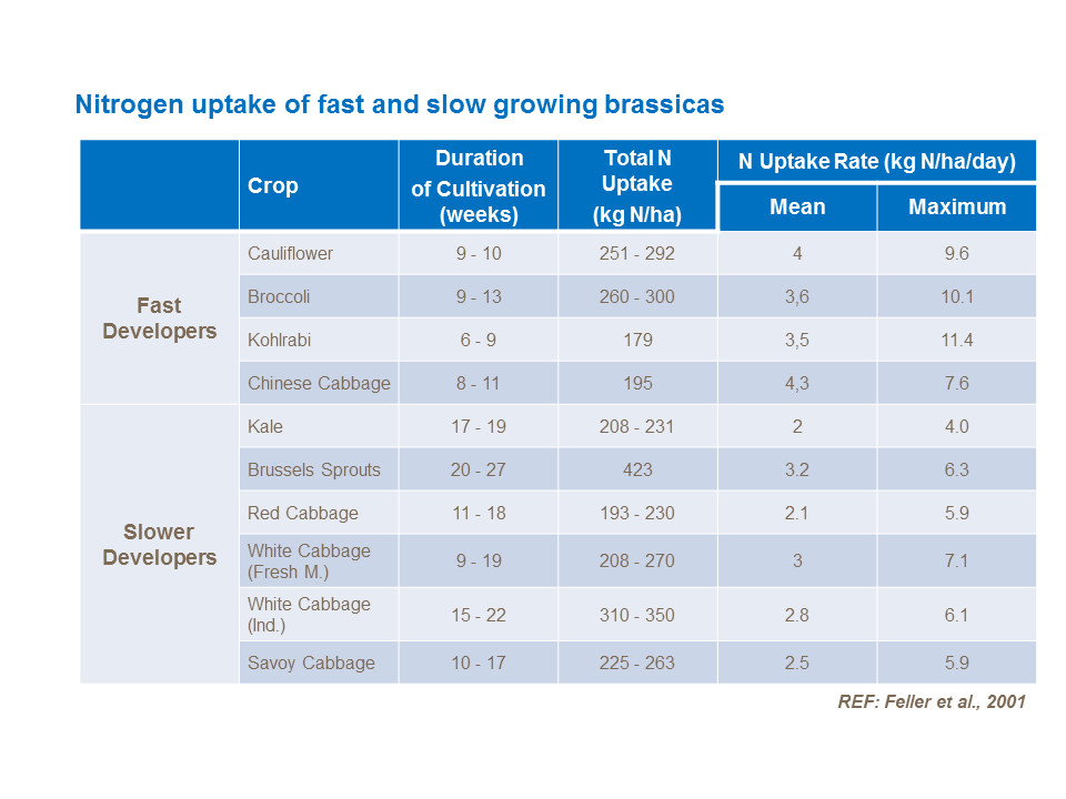 Nitrogen uptake of fast and slow growing brassicas