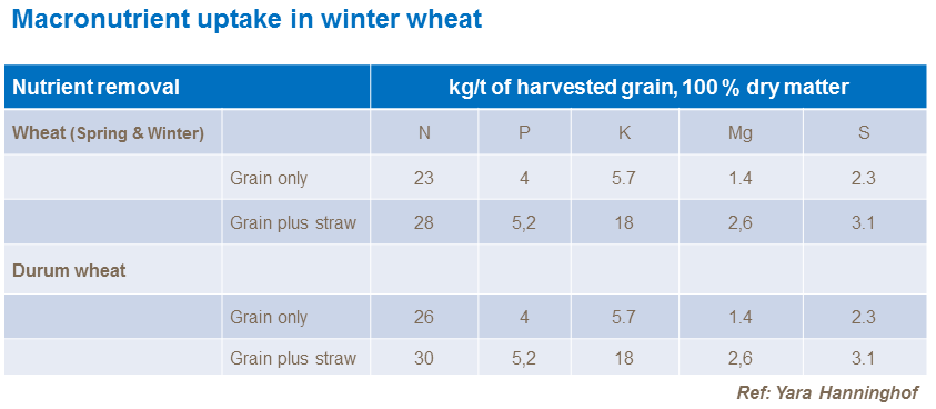 Macronutrient uptake in winter wheat