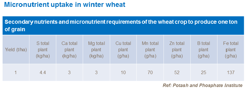 Micronutrient uptake in winter wheat